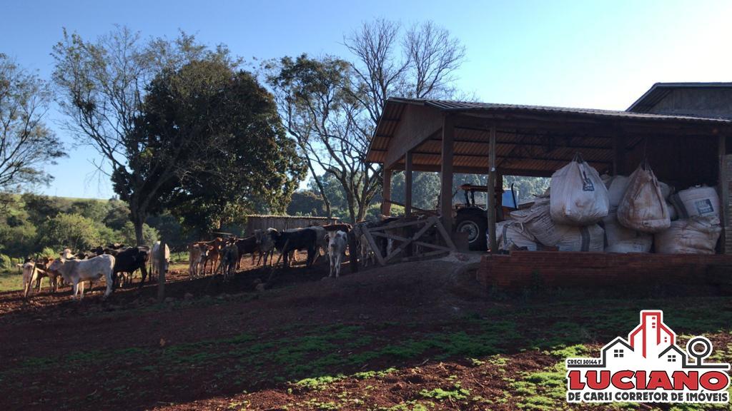 Fazenda à venda - Céu Azul | LUCIANO CORRETOR DE IMÓVEIS | Portal OBusca